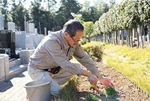 植栽、花壇の管理